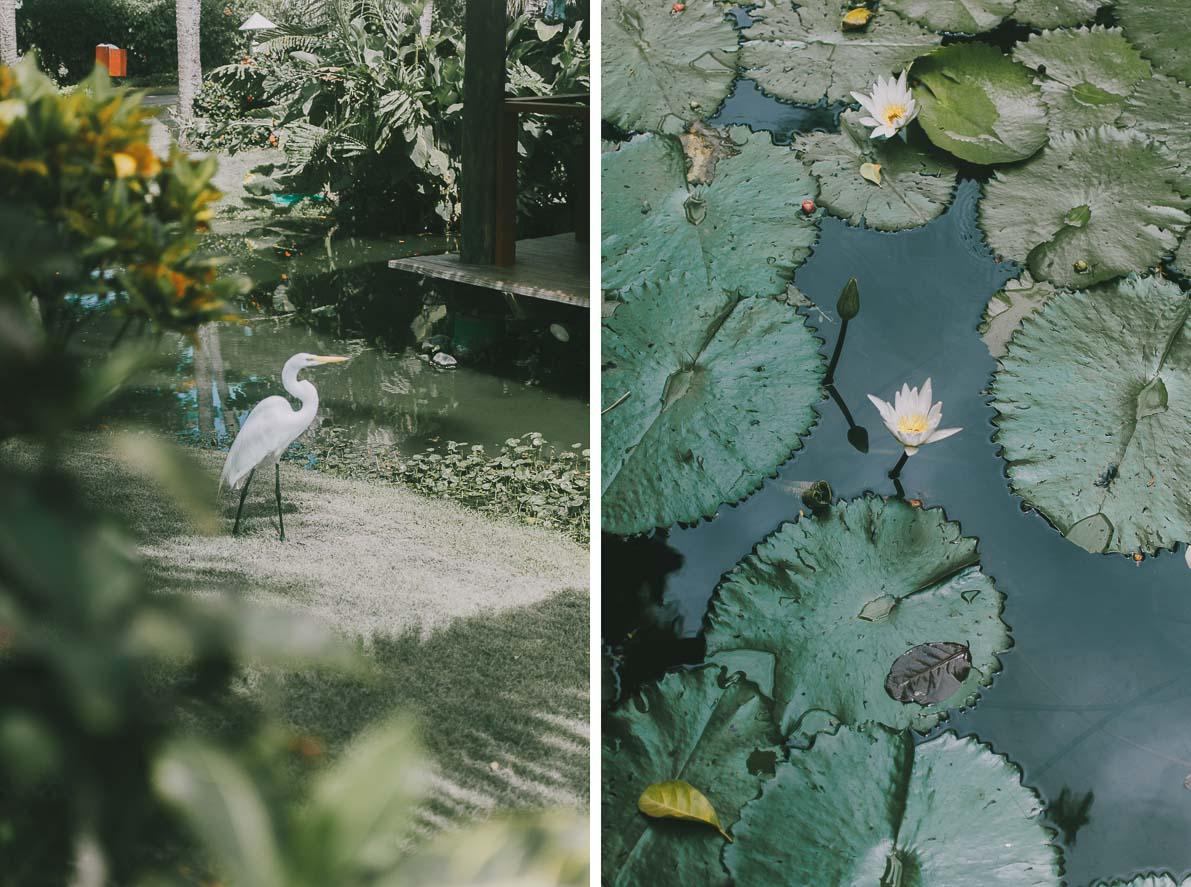 Punta-Cana-podroz-poslubna ptak