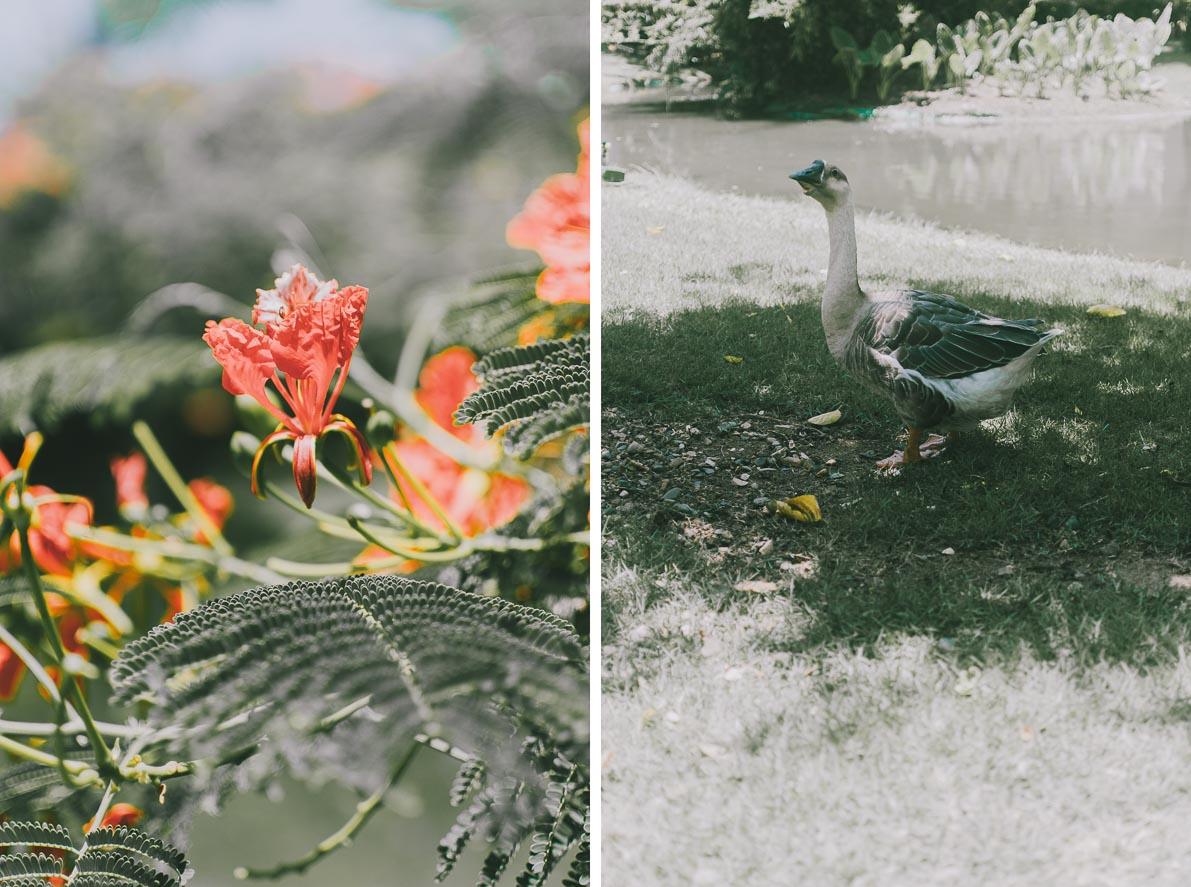 Punta-Cana-podroz-poslubna egzotyczny kwiat