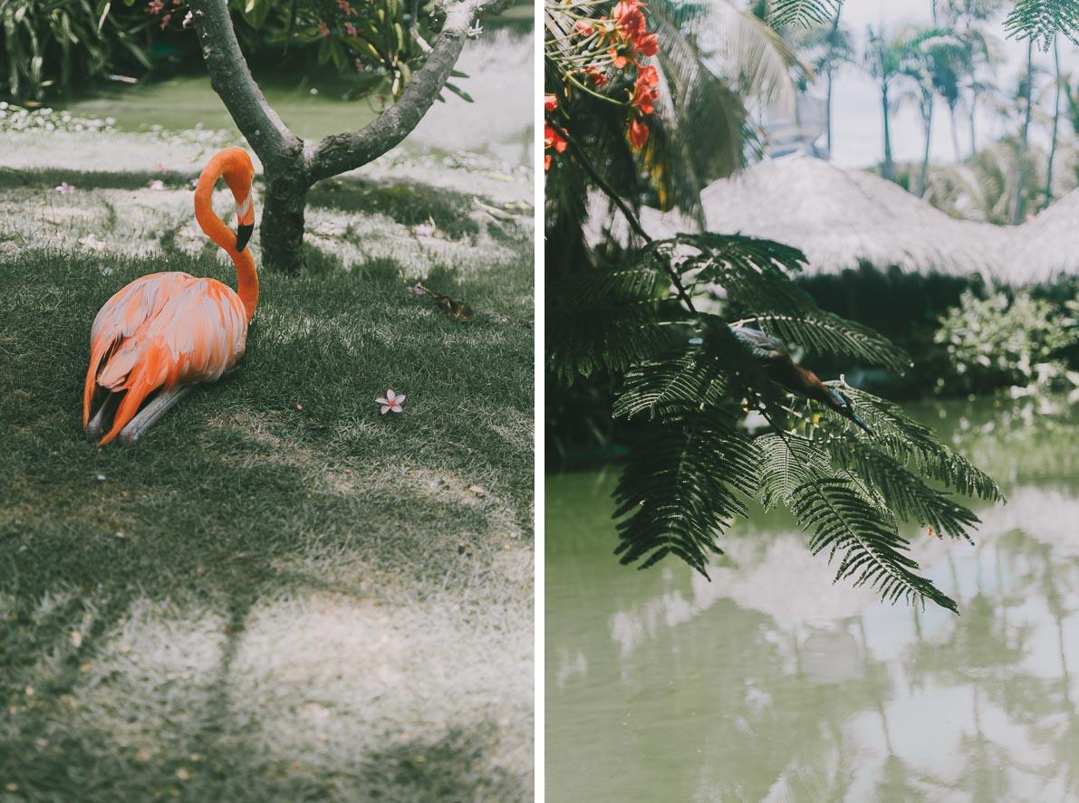 Punta-Cana-podroz-poslubna flaming