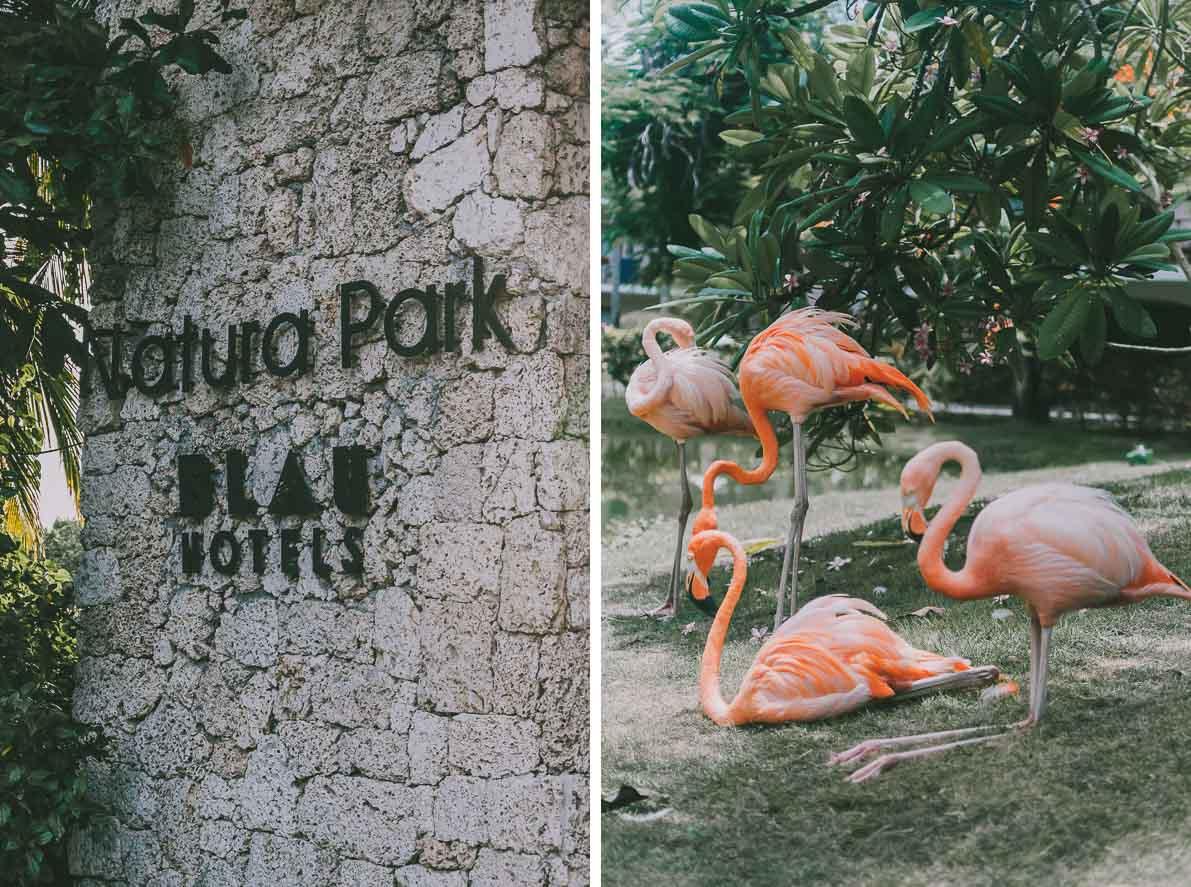 Punta-Cana-podroz-poslubna flamingi