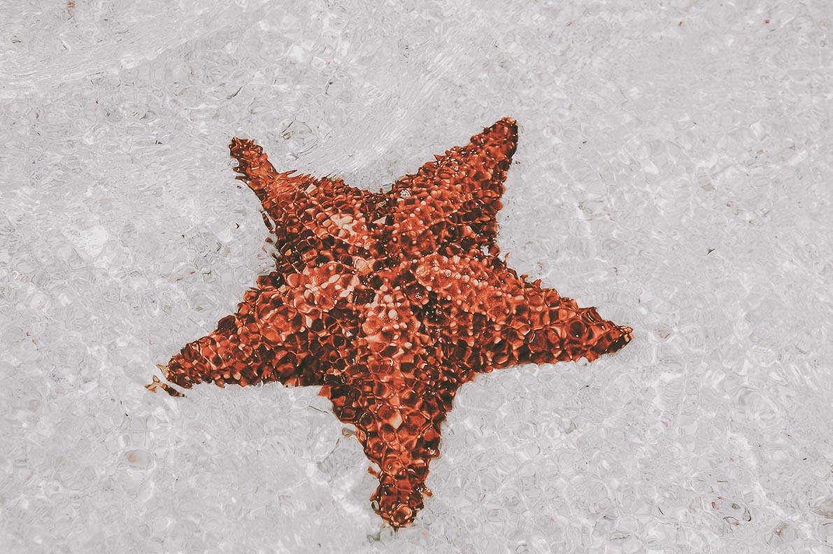 Wyspa-Saona rozgwiazda