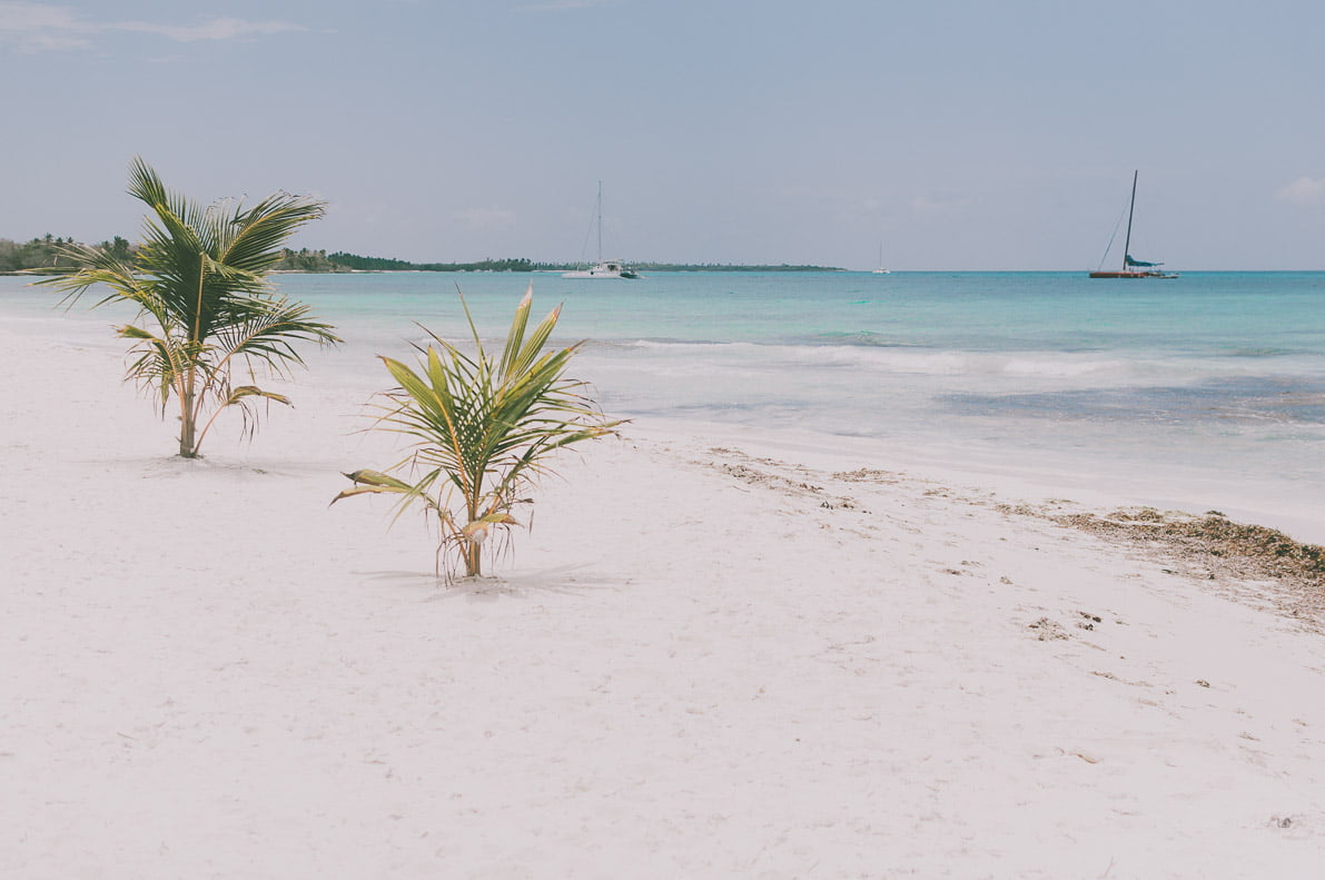 Wyspa-Saona namorzu karaibskim