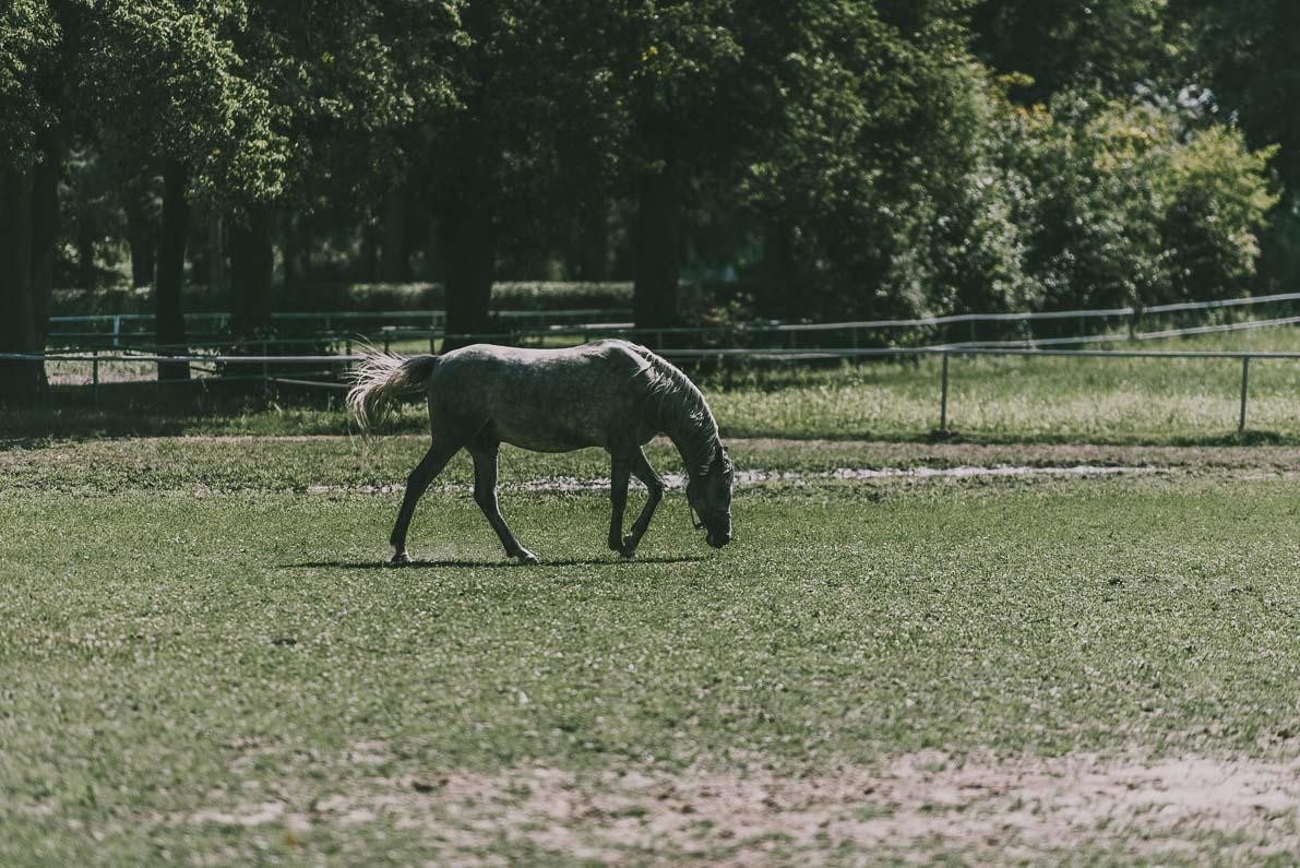 Alpakarium-agroturystyka Stadnina Koni Arabskich wJanowie Podlaskim