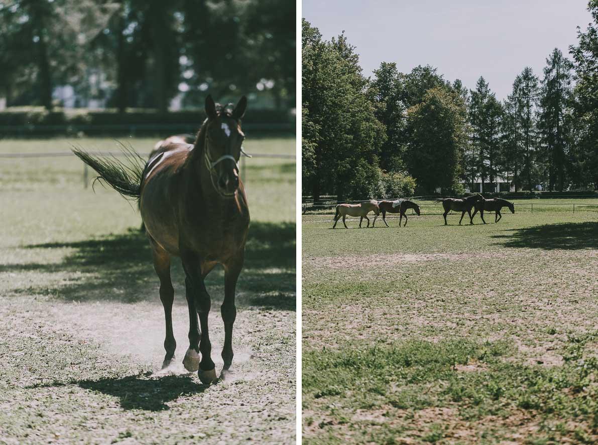 Alpakarium-agroturystyka Konie wJanowie Podlaskim