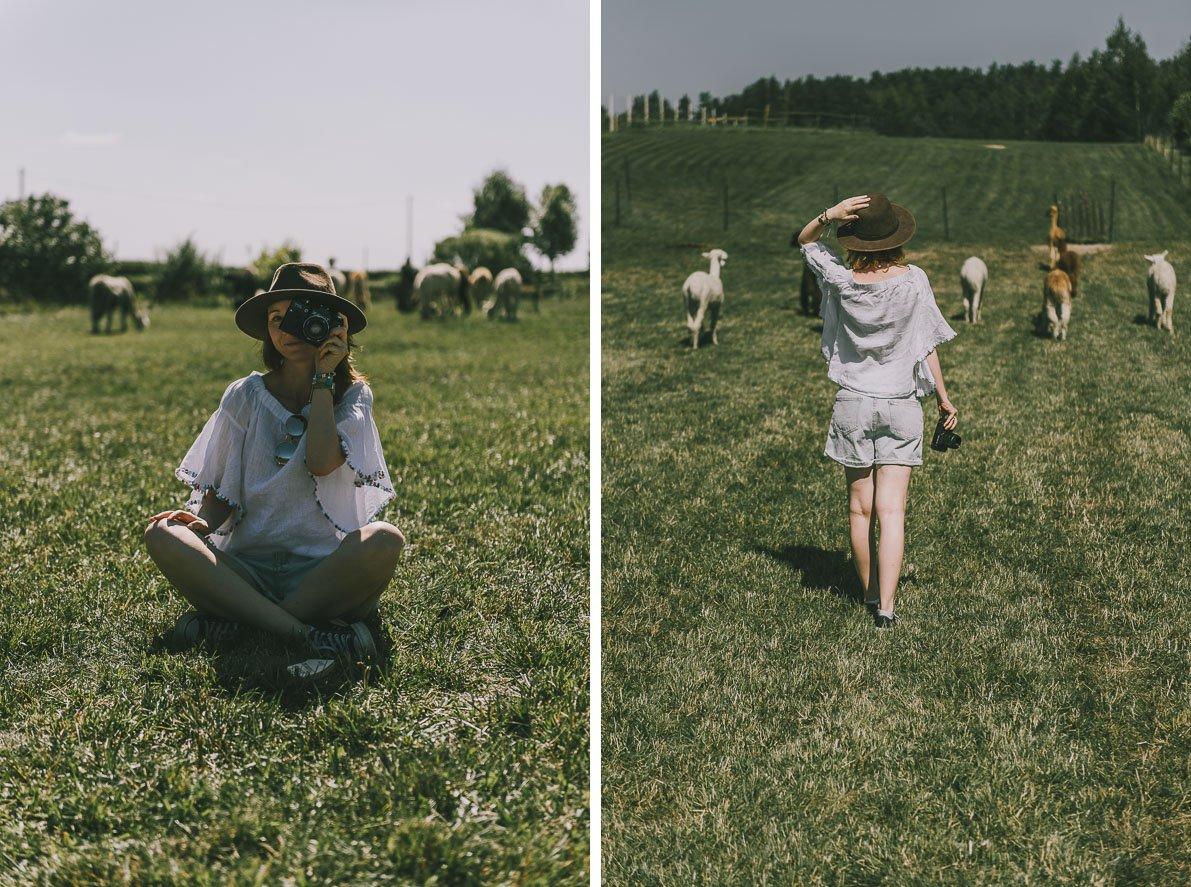 Alpakarium-agroturystyka pastwisko zalpakami