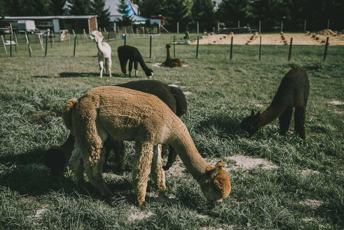 Alpakarium-agroturystyka