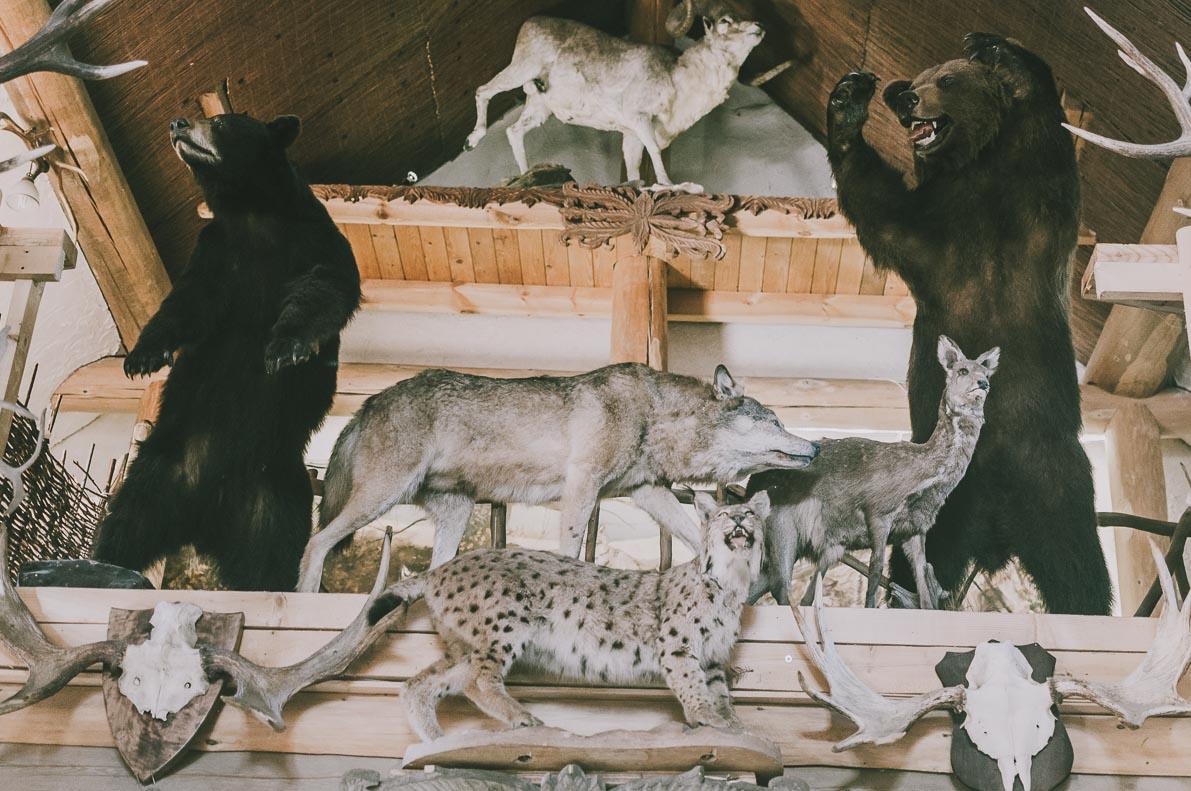 Bieszczady-kulinarnie Wilcza Jama wypchane zwierzęta
