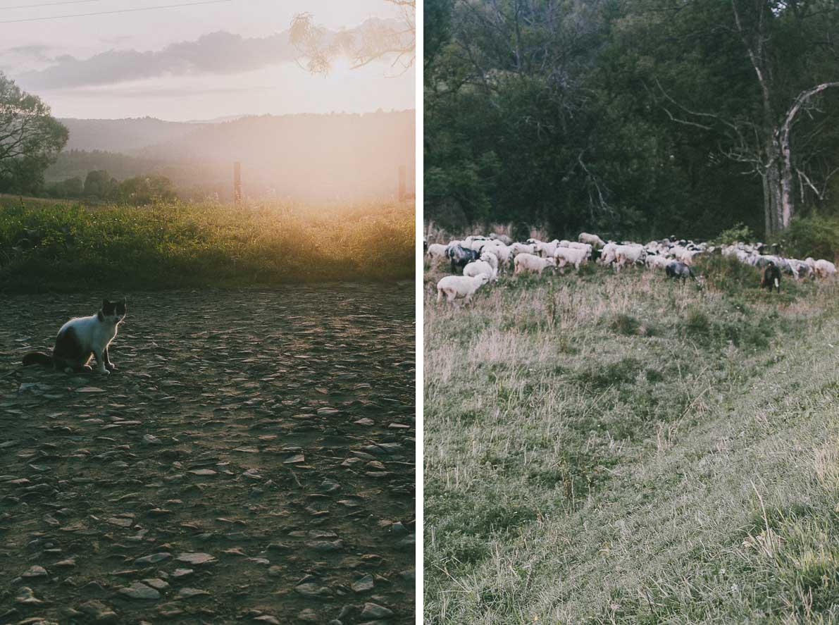 Dlaczego-warto-pojechac-w-Bieszczady Owce ikot
