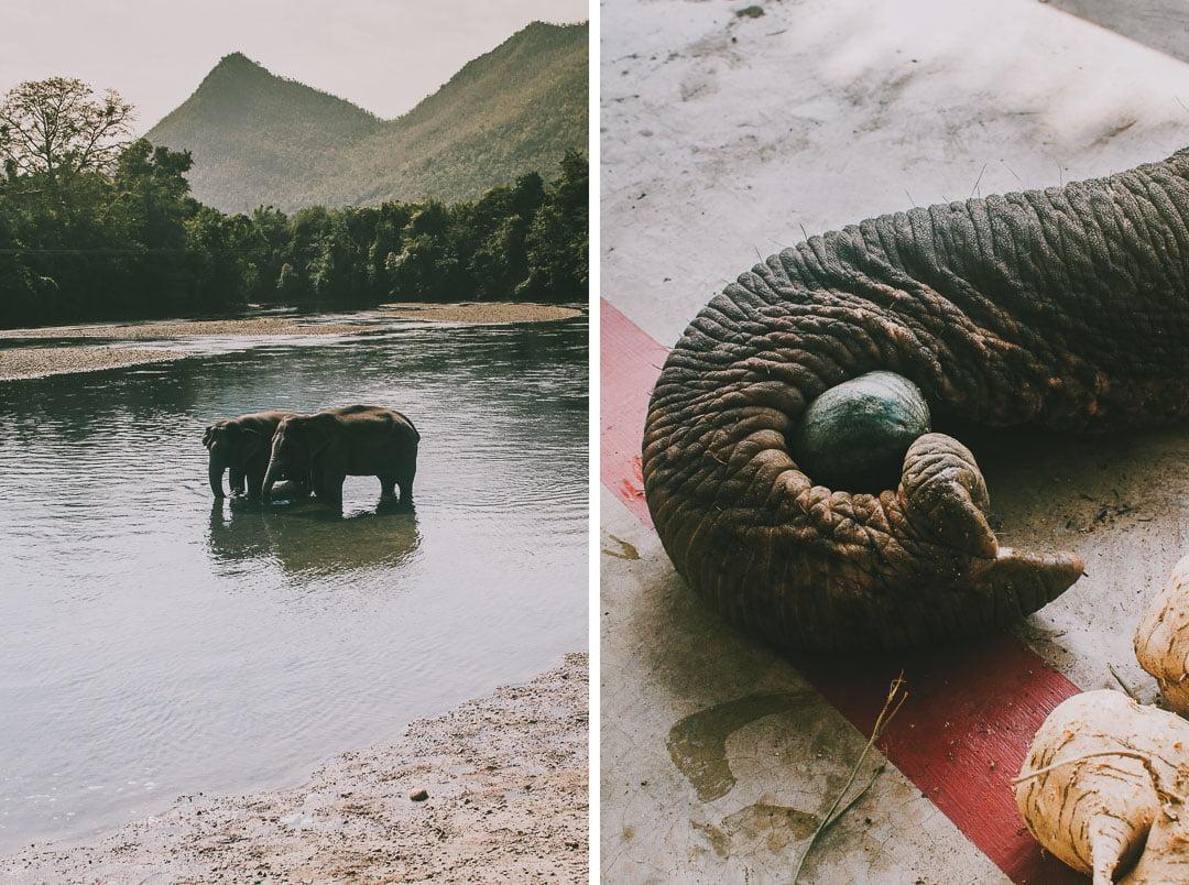 słonie wKanchanaburi