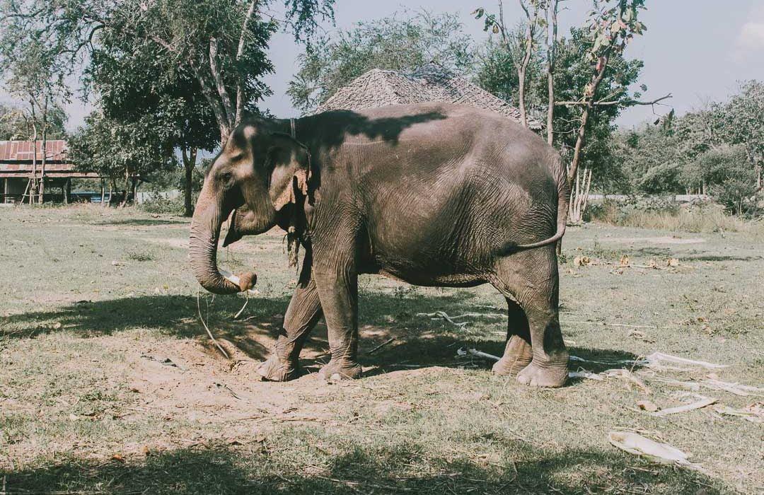 Elephants-World-Swiat-Sloni-w-Tajlandii