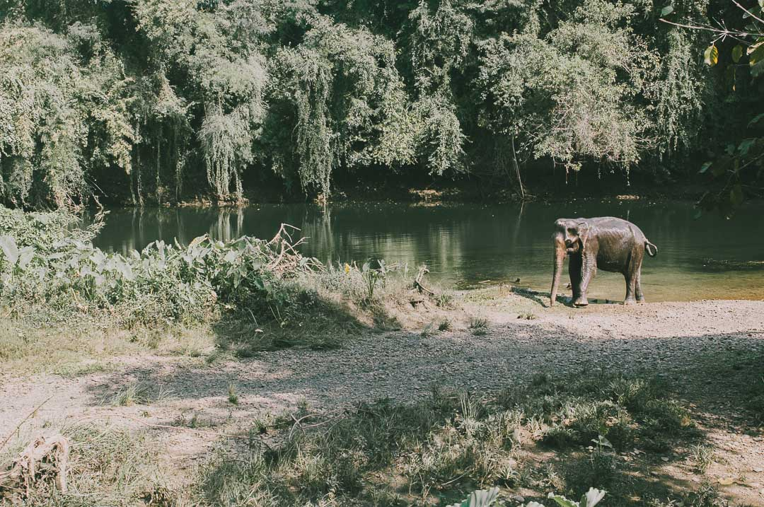Elephants-World-Swiat-Sloni w Kanchanaburi