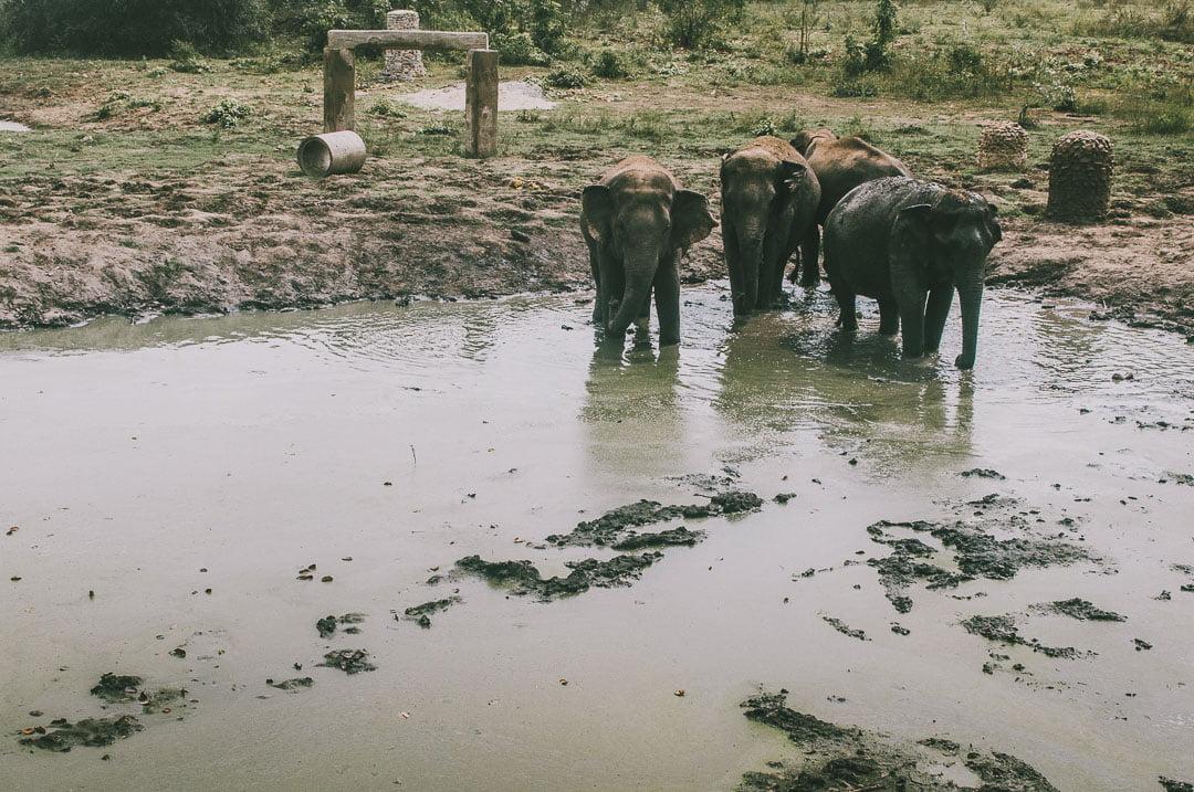 Swiat-Sloni-w-Tajlandii
