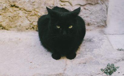 Koty-Malty