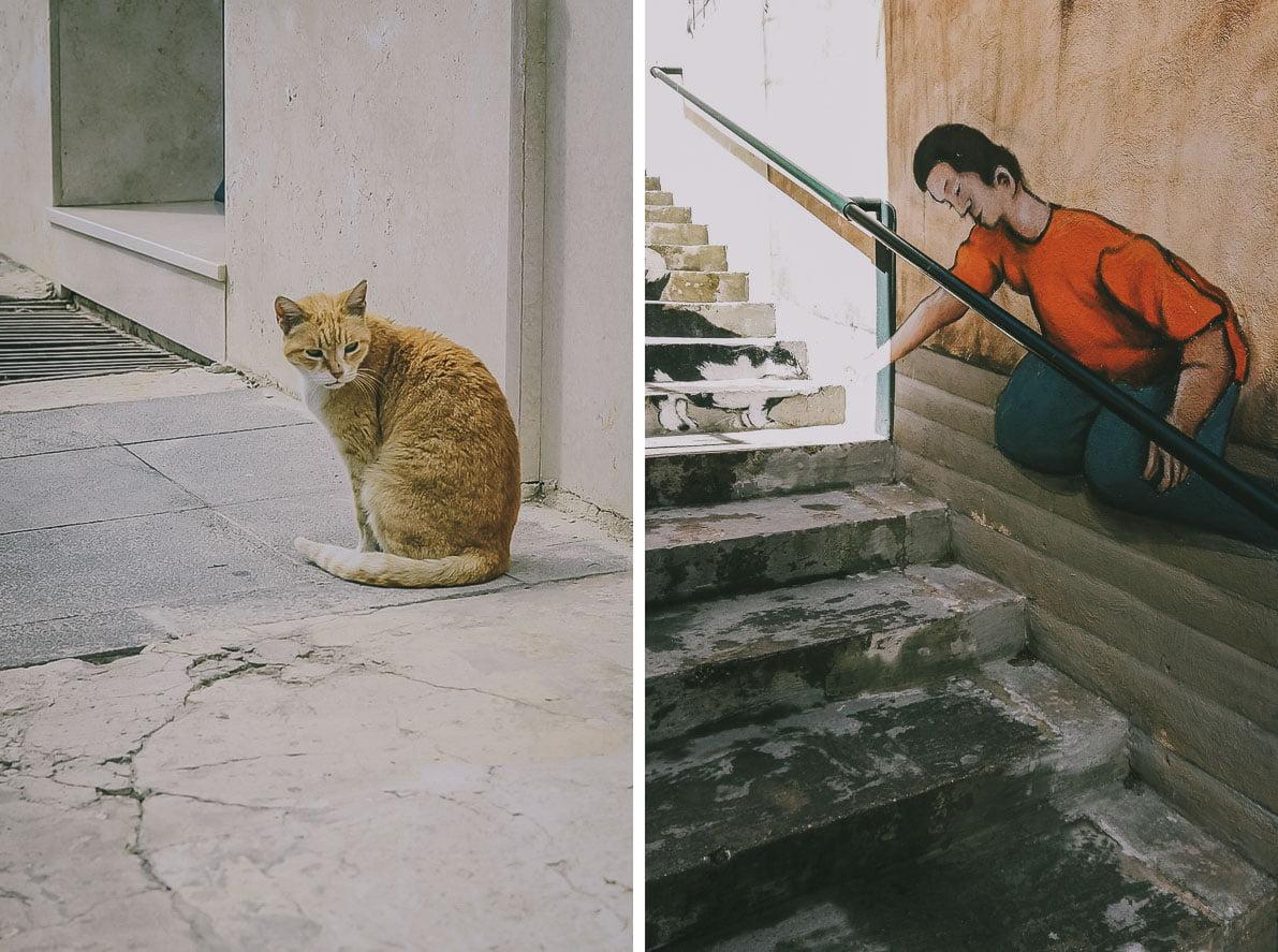 Maltańskie koty