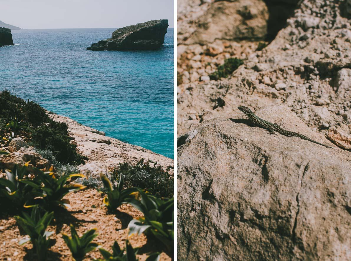Malta-plan-podrozy Wyspa Comino