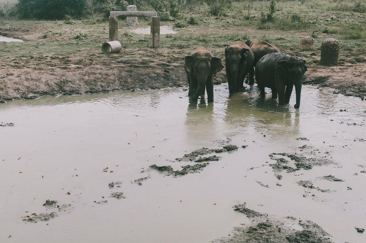 Tajlandia-plan-podrozy Thailand Elephant's World