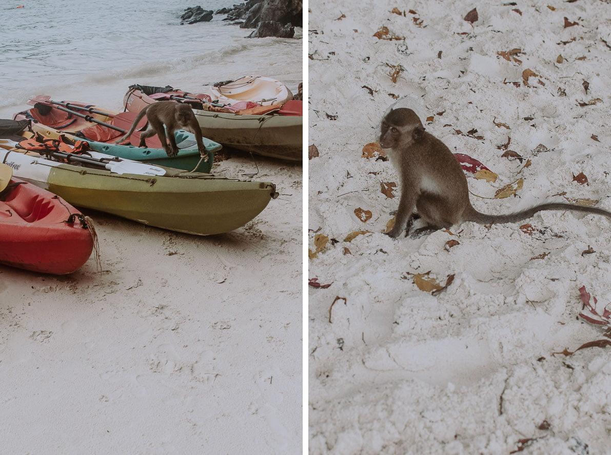 Wyspy-plaze-Tajlandii PLAŻA MONKEY BEACH