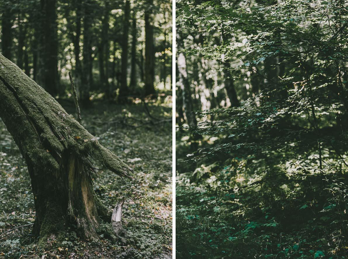 atrakcje-bialowiezy rezerwat ścisły puszczy białowieskiej