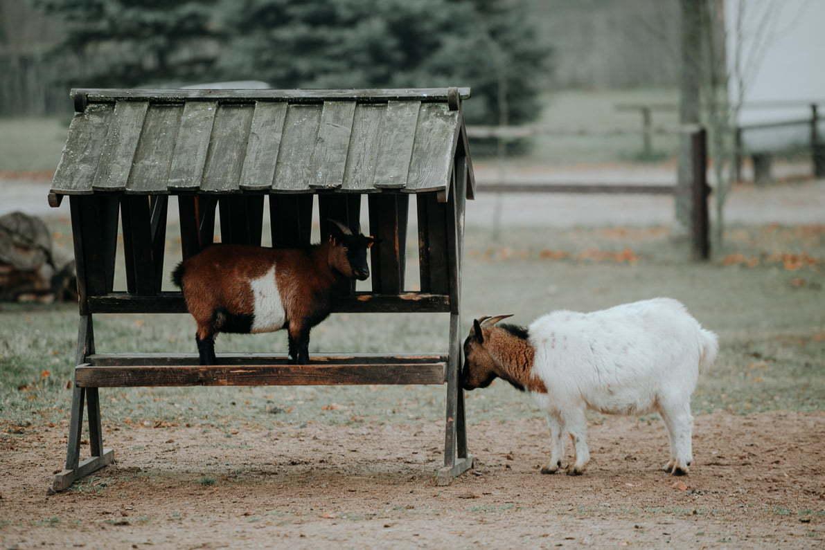 Palac-i-Folwark-Galiny Mini farma zwierząt wiejskich