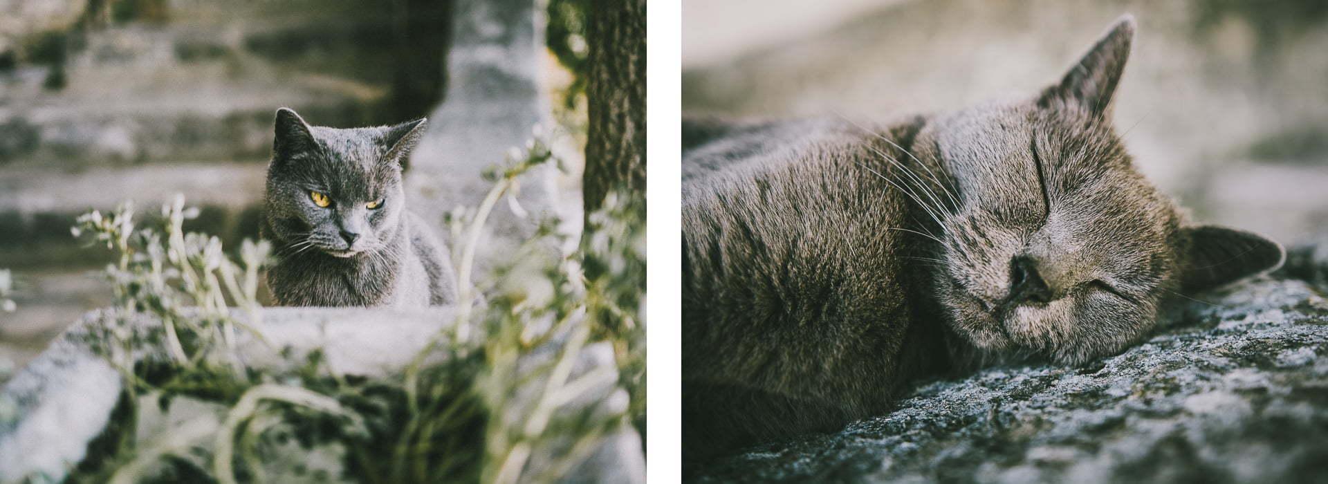 Najpiękniejsze miasteczka Prowansji Simiane – La – Rotonde koty