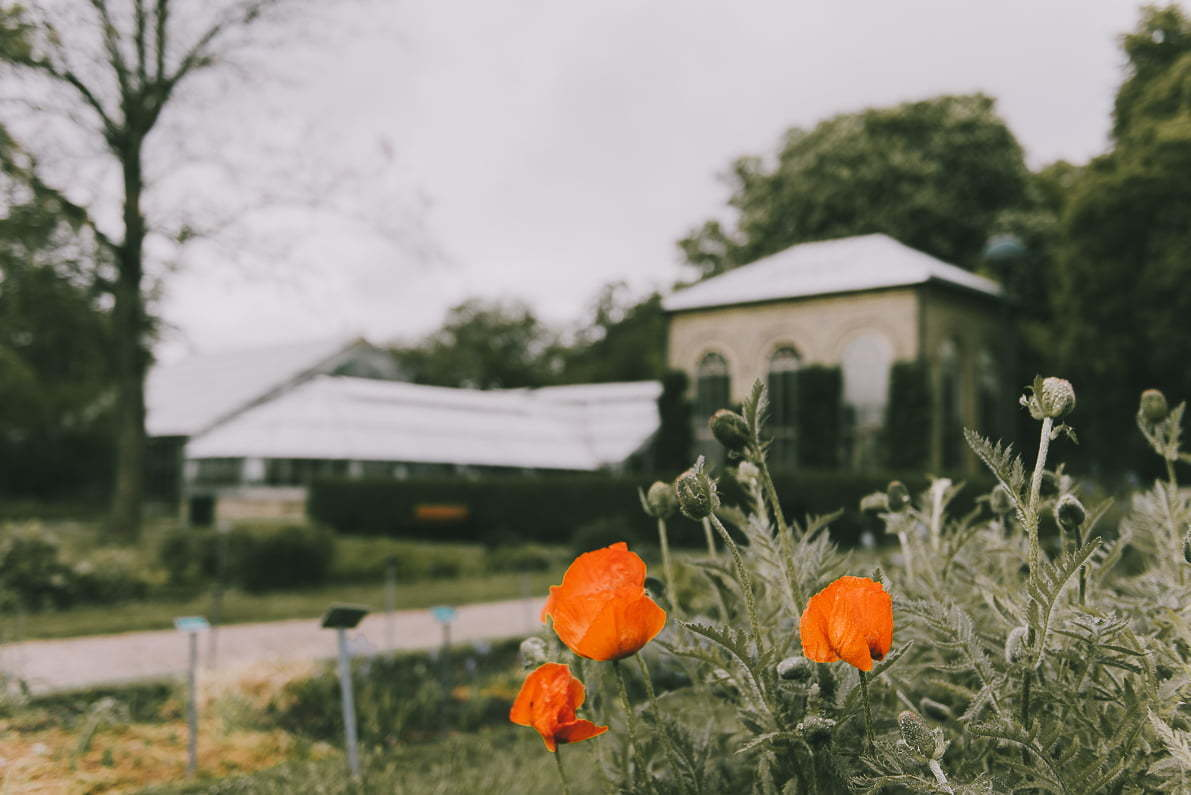 Lund Szwecja ogród botaniczny