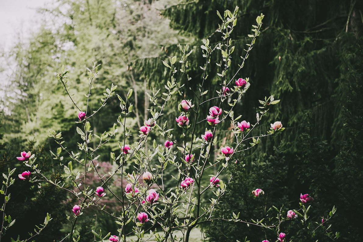 Atrakcje Lanckorony - kwiaty