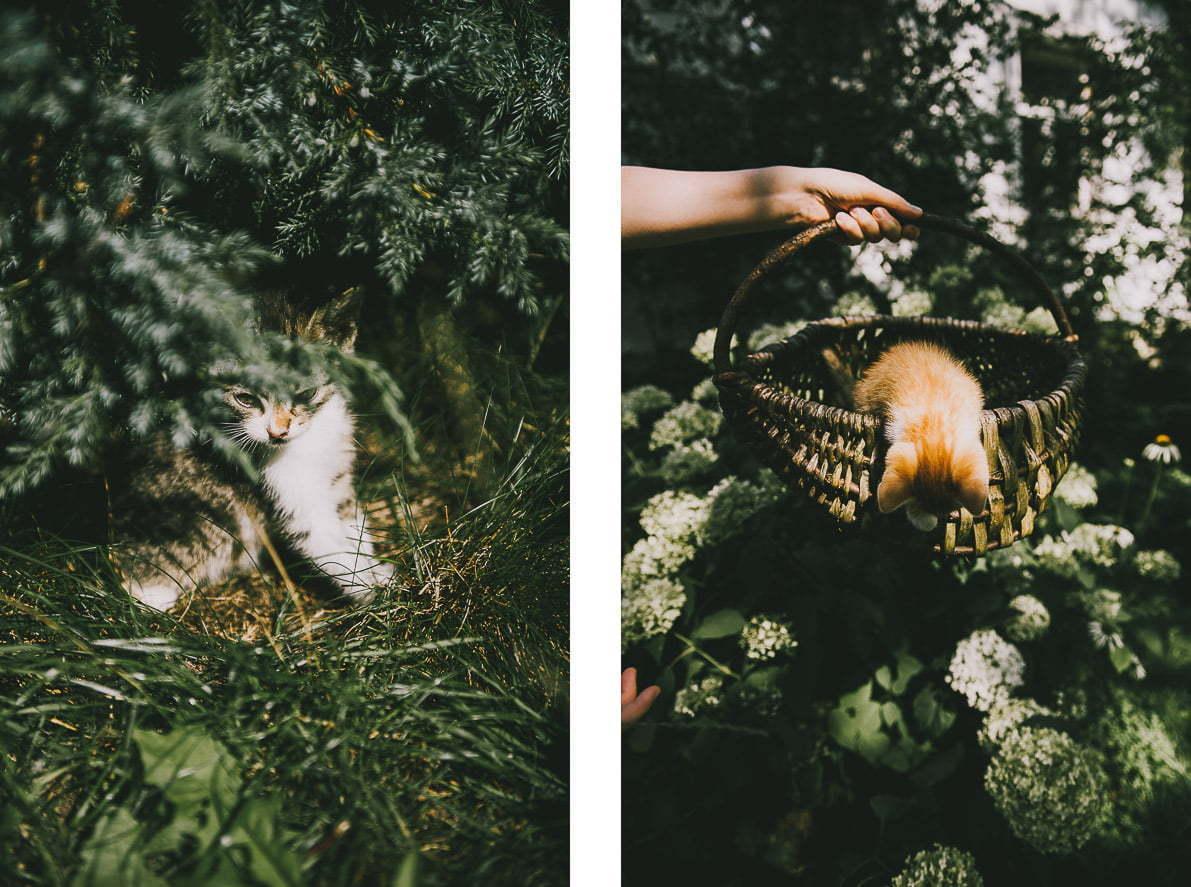 Dwór Łumbie – sielska agroturystyka naSuwalszczyźnie - koty