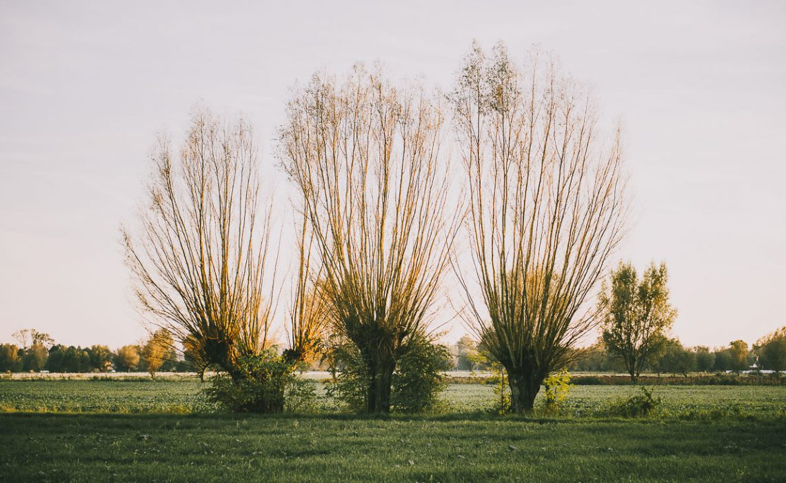 Żuławy Wiślane – szlakiem domów podcieniowych, mennonitów i holenderskich wiatraków.