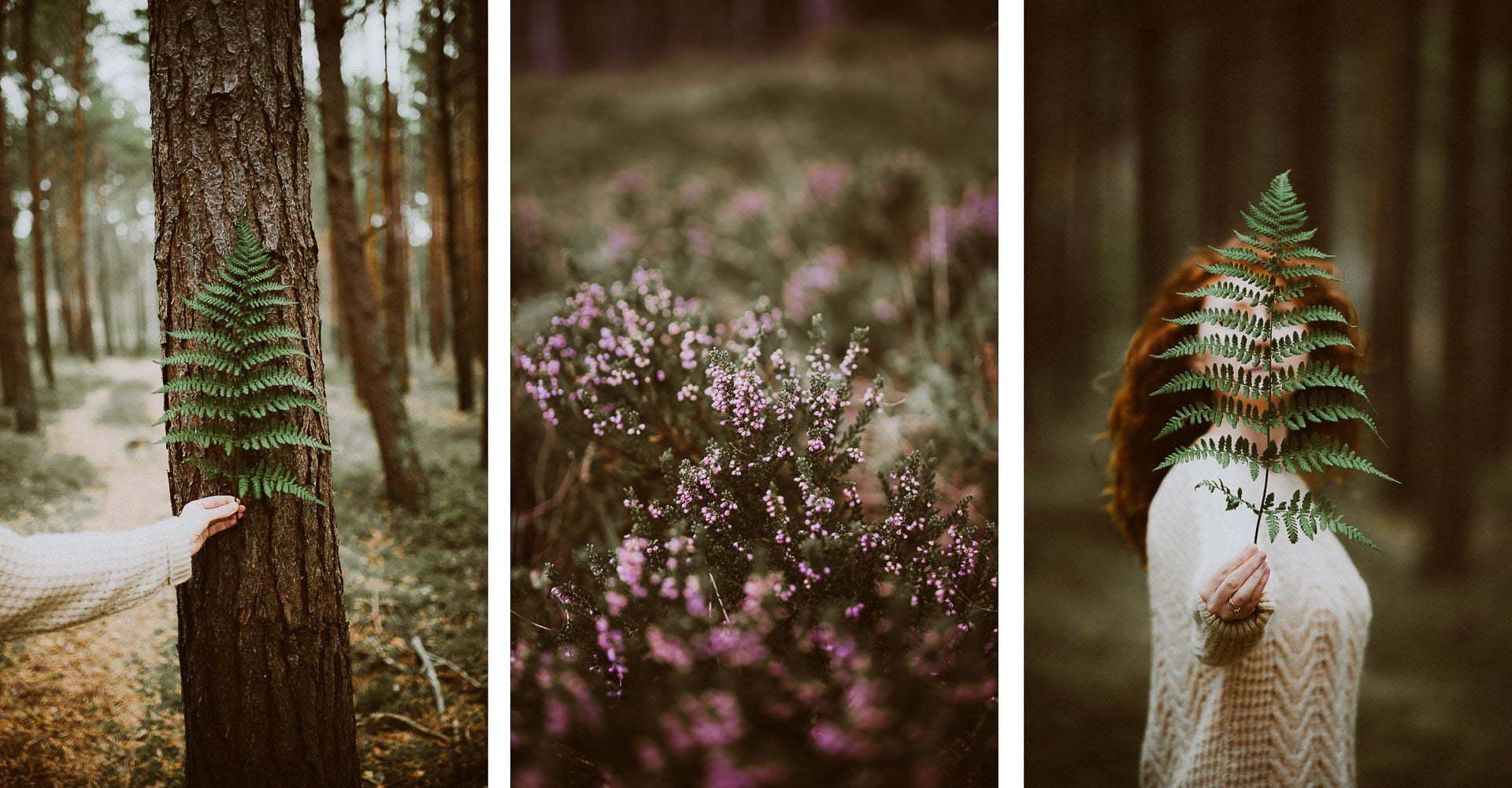 Pomysły najesienne zdjęcia - Las lubiatowski