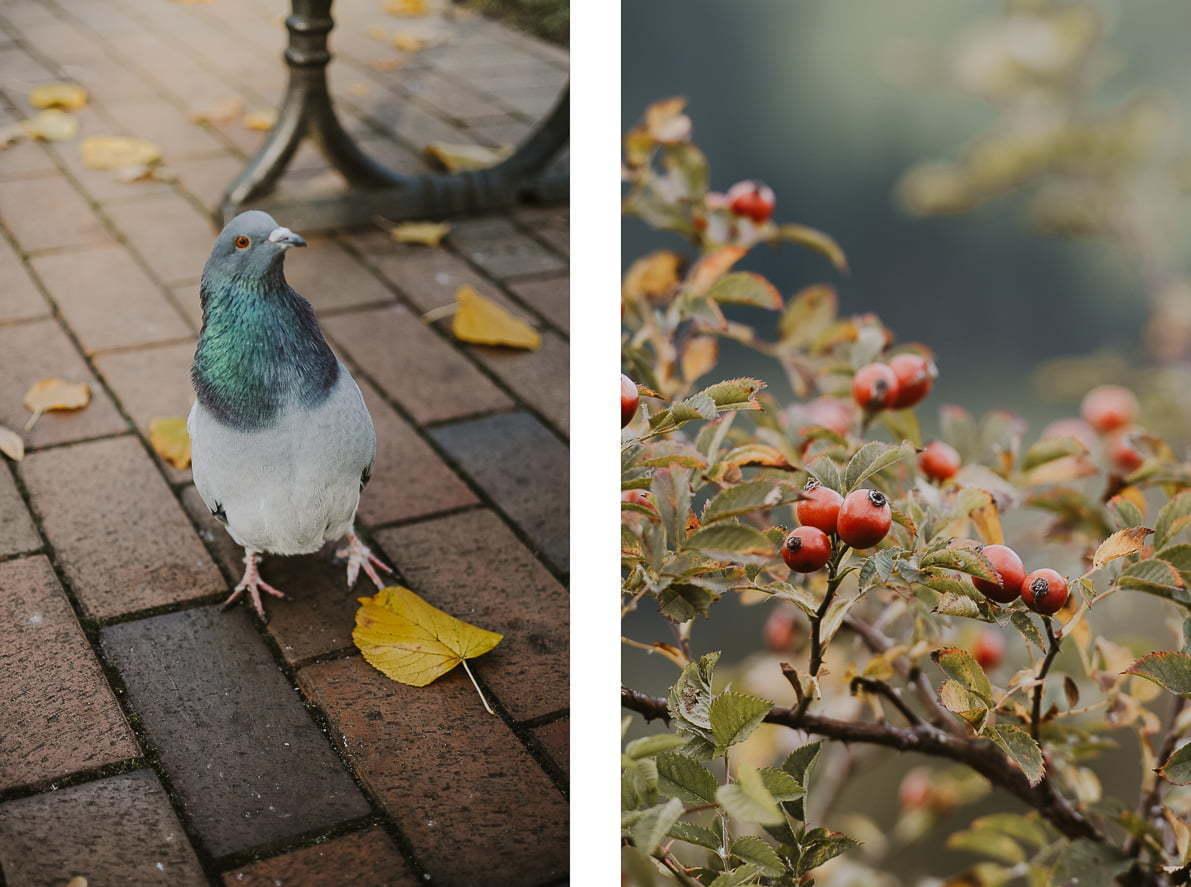 Pomysły najesienne zdjęcia - Park Oliwski