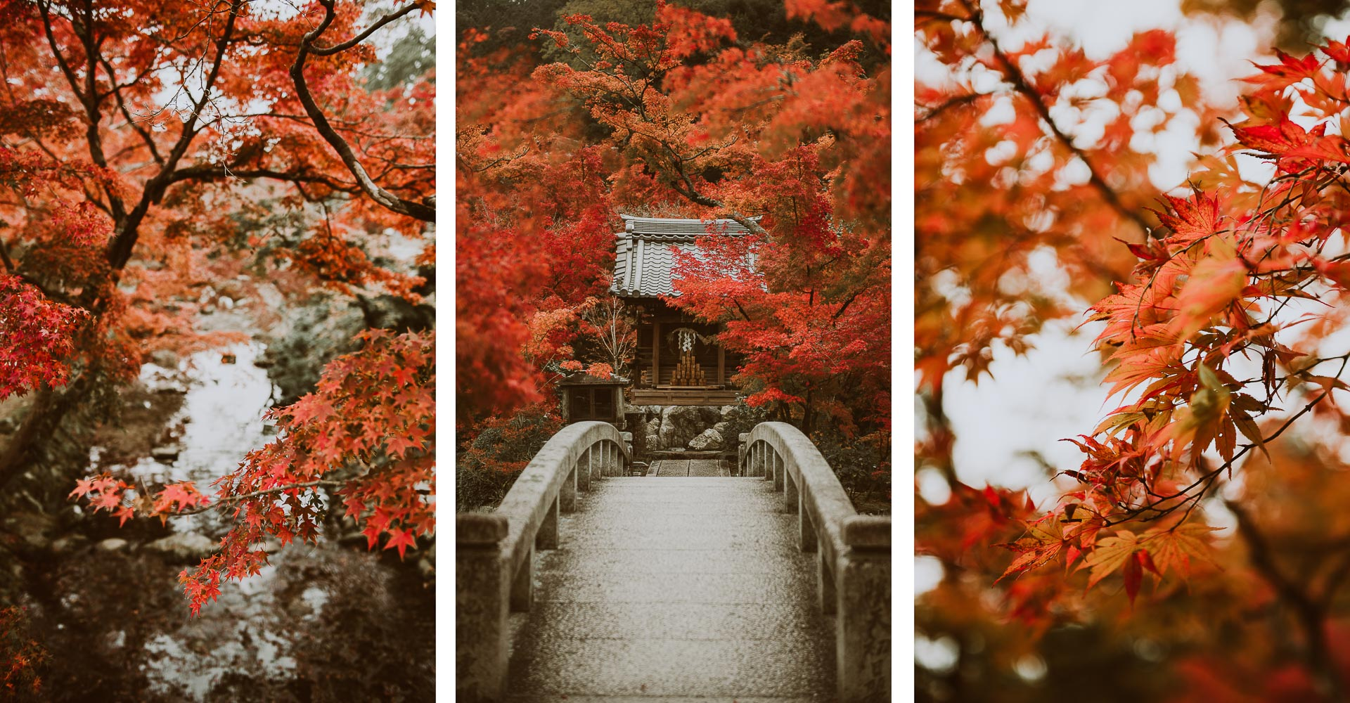 Japonia jesienią - zdjęcia klonów