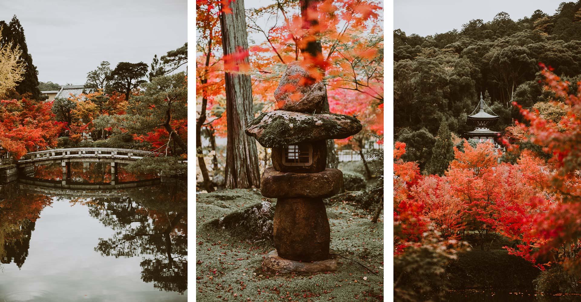 Japonia jesienią - zdjęcia klony