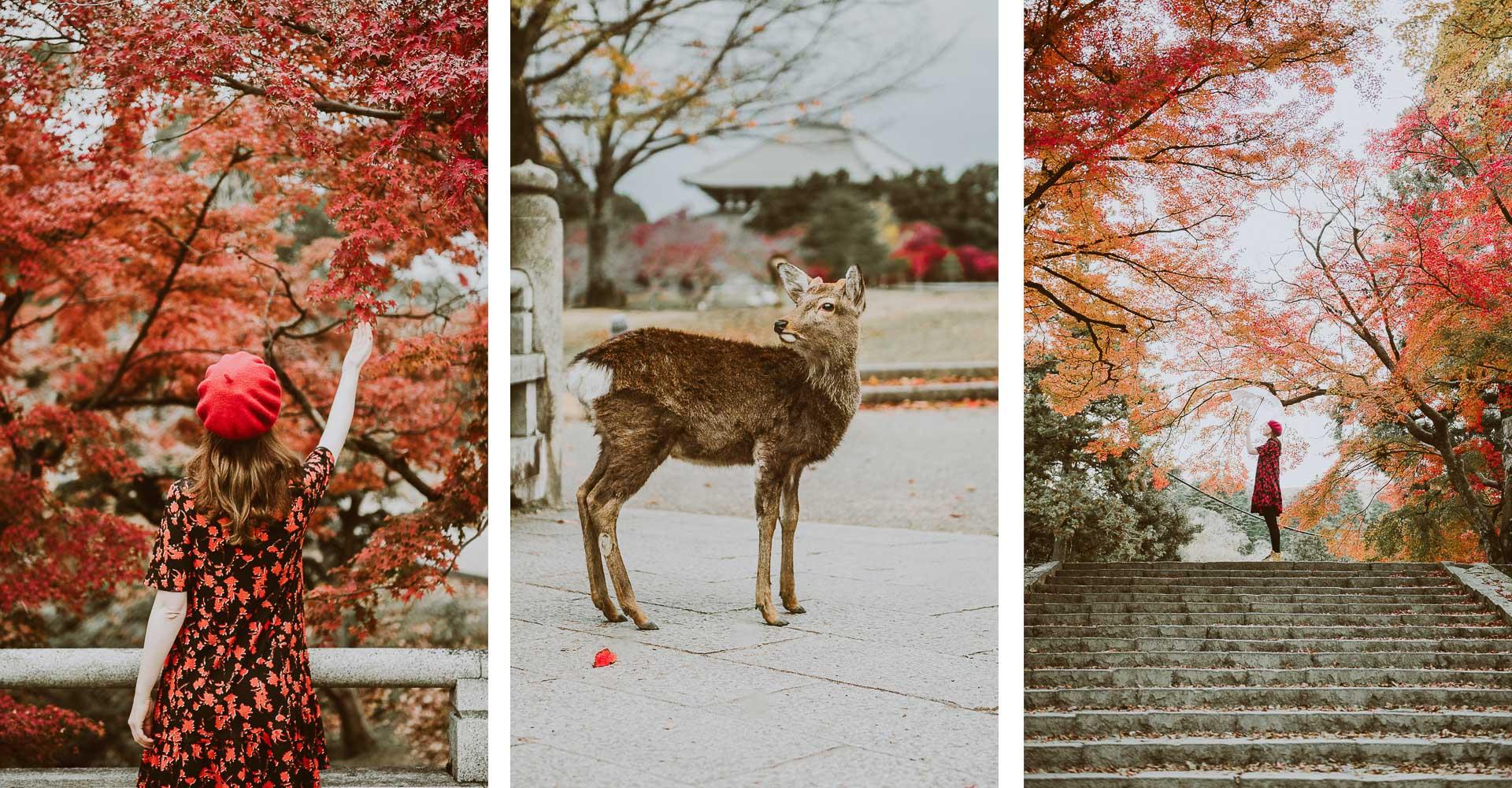 Japonia jesienią - zdjęcia Nara