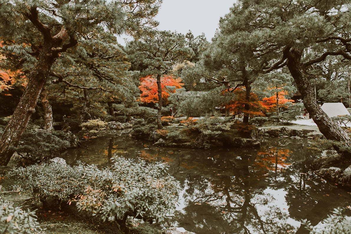 Japonia jesienią - zdjęcia parki