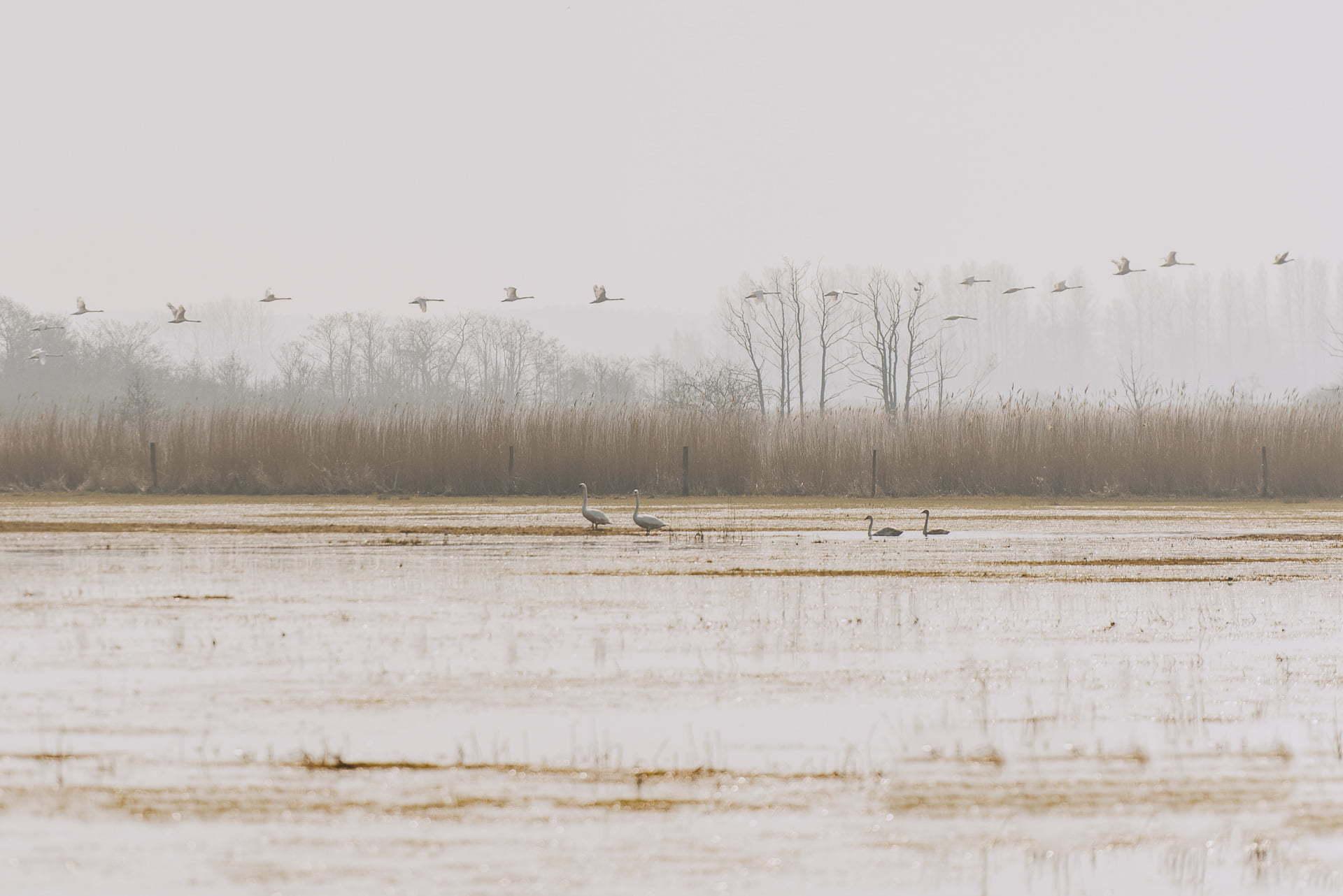 Rezerwat Przyrody Beka - stado ptaków