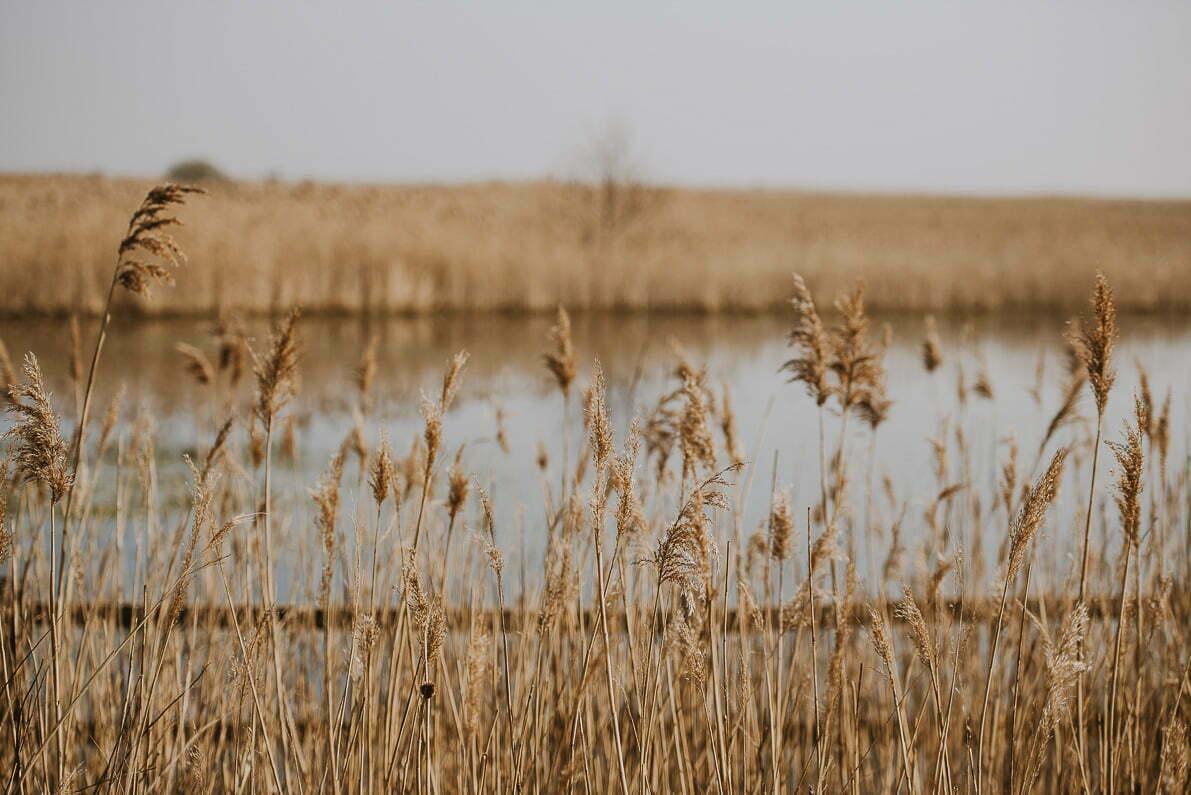 Rezerwat Przyrody Beka – niesamowita atrakcja Kaszub.