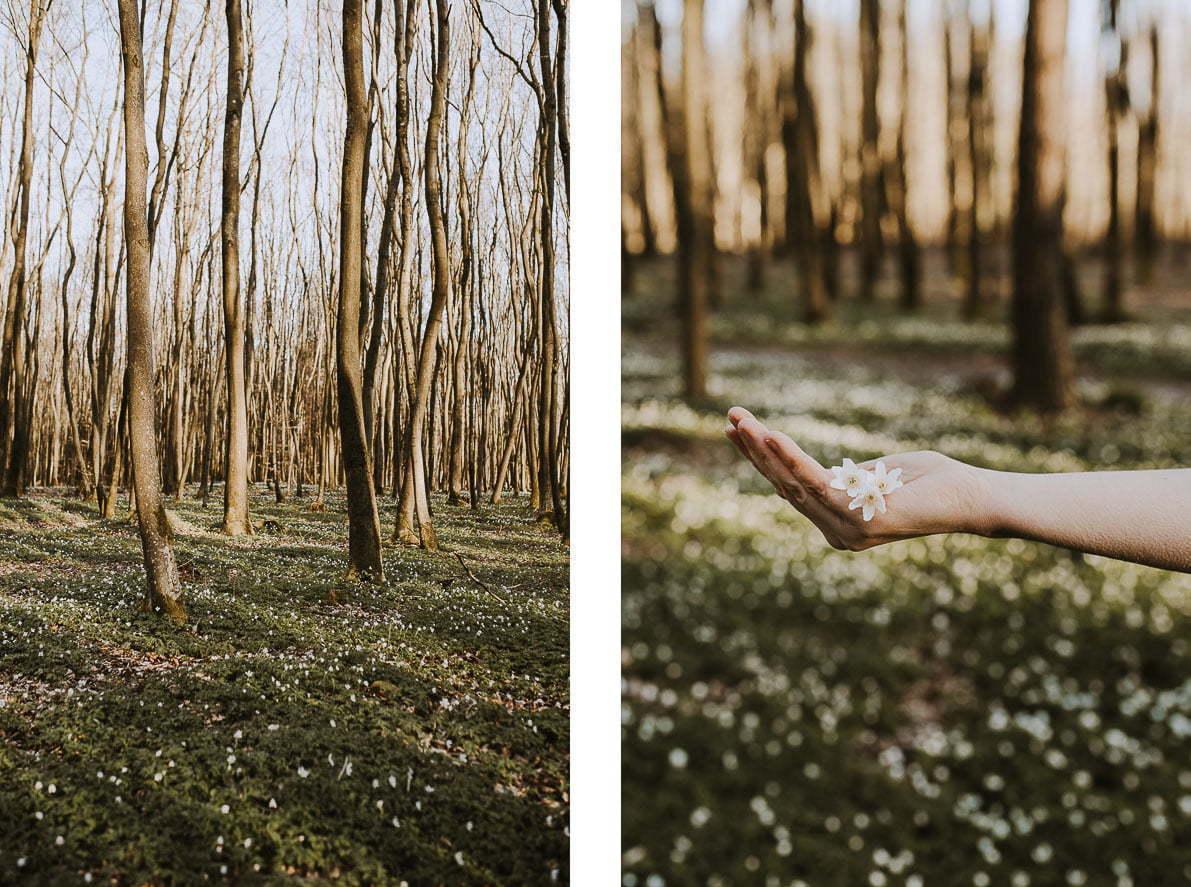 Wiosenne zdjęcia - wlesie