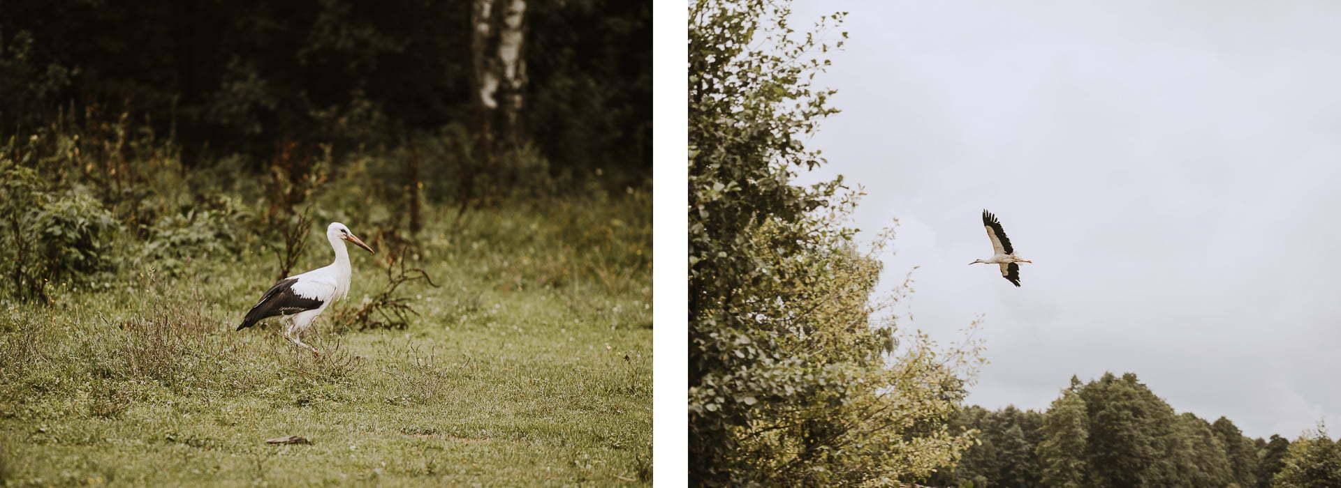 Wiosenne zdjęcia - fotografia ptaków