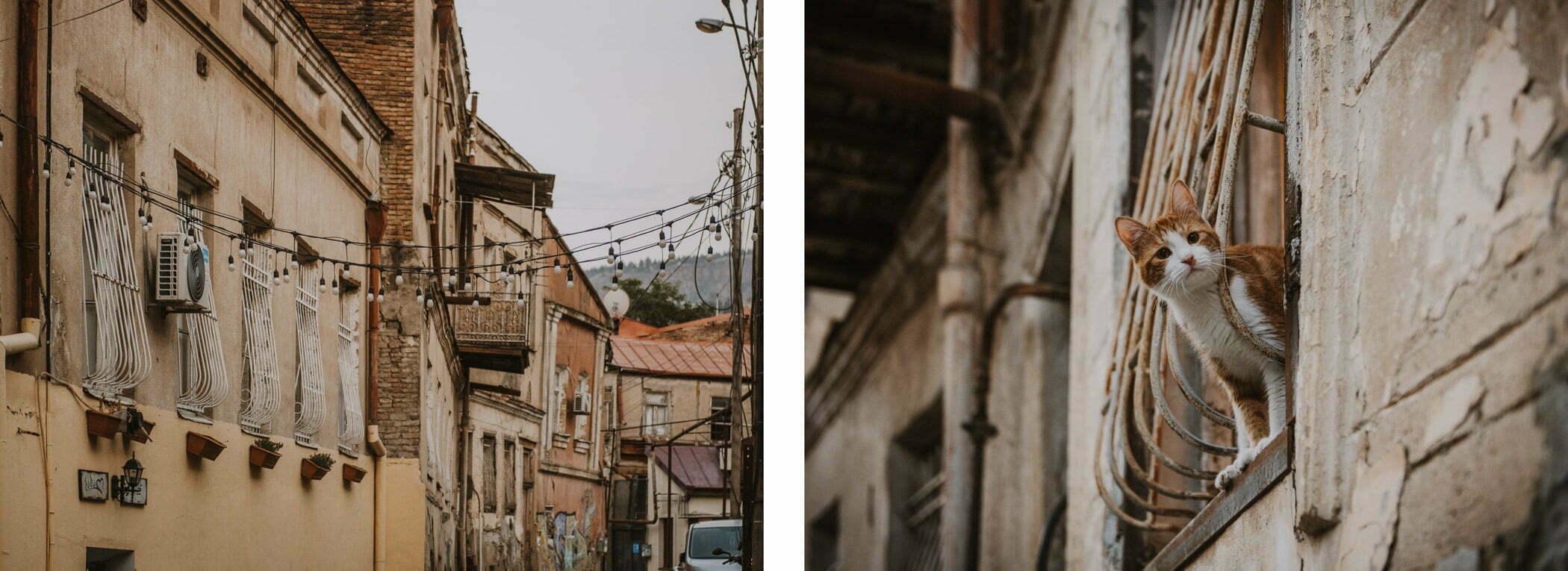 Stare Miasto - koty Tbilisi